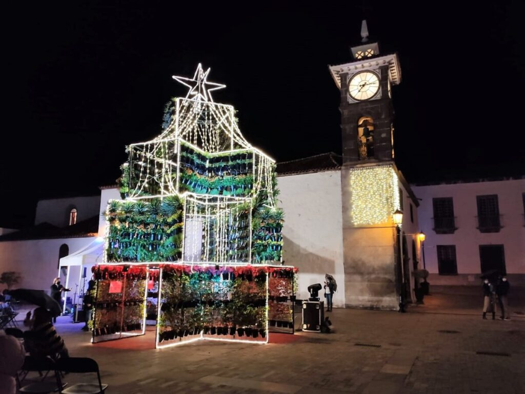 Arbol-de-San-Juan