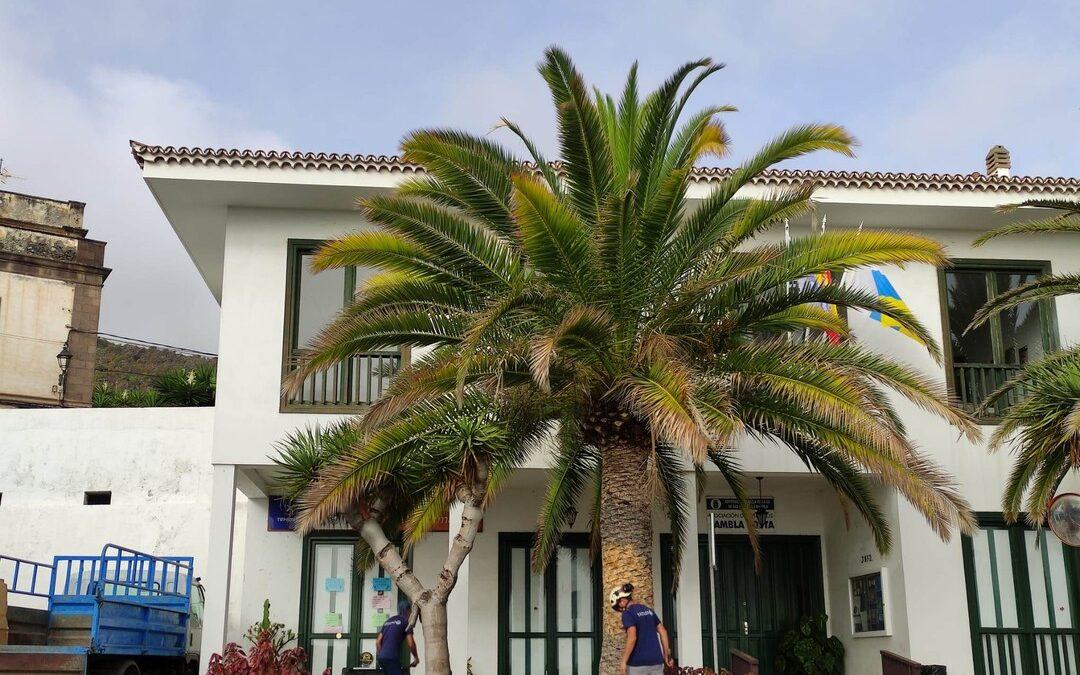 Actuaciones de mejora en medio centenar de palmeras