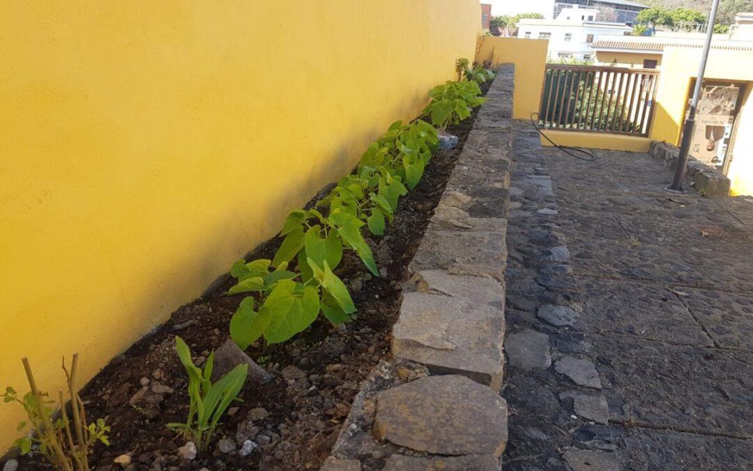 Afloran los primeros brotes en la huerta ecológica de la Casa Amarilla